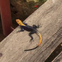 Abgesehen von ein paar Geckos habe ich in Nigeria bisher wenig Tierwelt gesehen