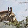 Eindeutig die beeindruckendsten Wimpern in der Tierwelt!
