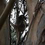 Ein wilder Koala!