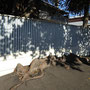 Zaun und Baum in seltener Harmonie