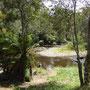 In diesem Fluss soll es leben und auf Tassie sogar einigermaßen tagaktiv sein