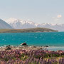 Lake Pukaki am Mount Cook