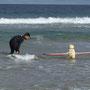 In Australien geht man auch schon mal mit Hund zum Surfen!