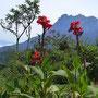 ...an den Hängen des Mount Kinabalu