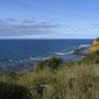 Die große Schleife um das Split Point Lighthouse startet an der Steilküste...