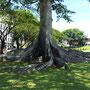 ...mit beeindruckendem Baum...