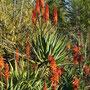 Noch mehr rote Blumen