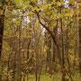 Mitten in Perm steht ein ziemlich großer Wald