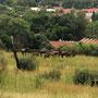 Auf den Hügeln in Pretoria...