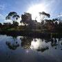 Und zuletzt ein Gumtree/Sonnen/Wasser-Stimmungsfoto