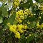 ...gelbe Blüten...