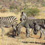 Vielleicht sogar die schönsten Tiere Afrikas!