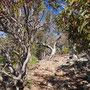 Australisches Buschland