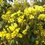 Mehr gelbe Blüten am Ende des Weges