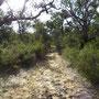 Unser Pfad in den Busch