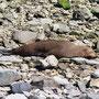 Und natürlich ganz viele 'totally relaxed kiwi fur seals'!