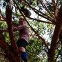 Trotz dicken Knies: Nicky beim Annäherungsversuch an einen Koala