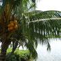 Am Sarawak River
