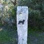 Lama-Crossing?