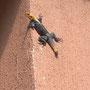 Geckos gibt es hier jede Menge
