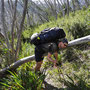 Ganz schön anstrengend über die toten Bäume zu krabbeln...