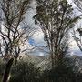 Immer noch unterhalb der Baumgrenze obwohl es schon seit Stunden bergauf geht....