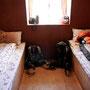 Typisches Zimmer in einer Himalaya-Lodge