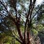 Sooo klein ist der Baum gar nicht