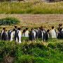 1 m auf dem Pinguin-O-Meter