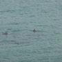 Die Delphine schwimmen so entspannt vorbei...