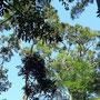 Gespannter Blick in die Baumkronen