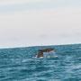 Und Wale haben wir auch jede Menge gesehen!