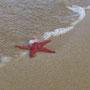 ...und steckt ab un zu ein Füsschen ins Meer!