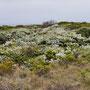 Vegetation entlang der Steilküste