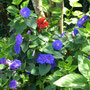 ...ein paar letzte Blüten...