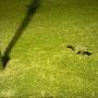 Possum, das das Interesse an uns verloren hat