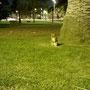 Neugieriges Possum