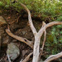 Ein Schrei! - Aber keine Tigersnake... Fotomöglichkeit vergeigt...