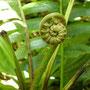 Ein kleiner Blumenkringel
