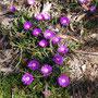 ...die kleinen Schönheiten der Natur...