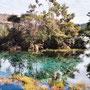 Te Waikoropupū Springs: hier ist das klarste Wasser der Erde zu finden! Kein Witz!