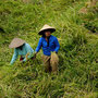 Workpeople, Jatiluwih Rice Fields