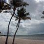 der einzige Strand von Key West (nähe Flughafen) - Smathers Beach