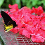 im Butterfly Park