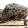 Oase mit einem Tamarinden Baum