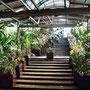im Orchideen und Hibiscus Garten