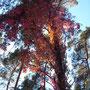Herbstimpressionen 2013