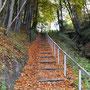 Treppe zum Wald