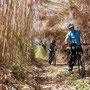 ein trail ... im bambus...!