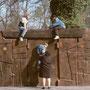 """""""la porte amphithéâtre"""" au Parc de la Pépinière à Nancy - séquoia"""